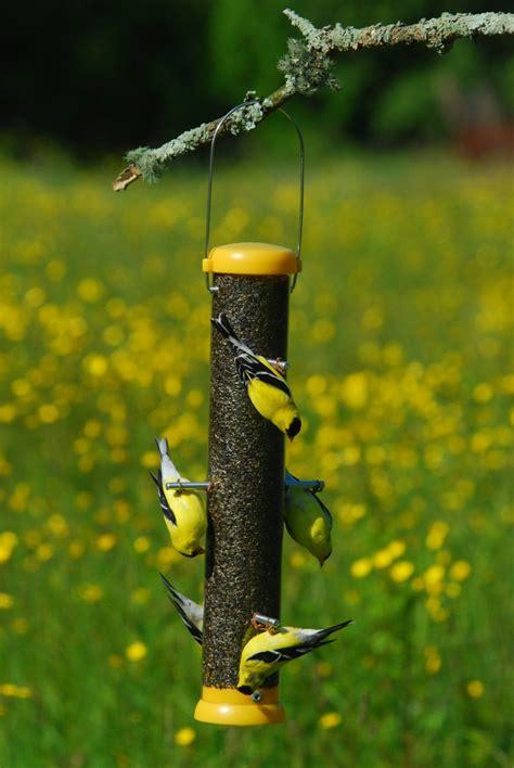 bird lovers 15 quot bottoms up finch feeder bl buf15 droll