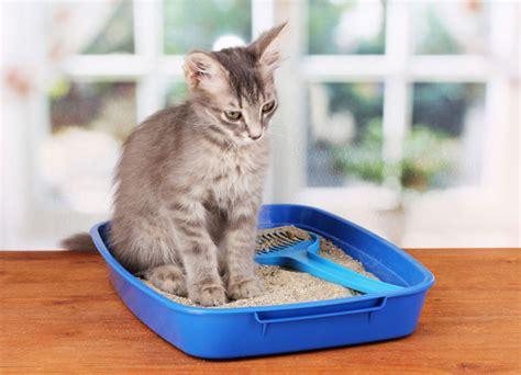 cassetta per gatti cassetta e lettiera per gatti meglio scoperta o coperta