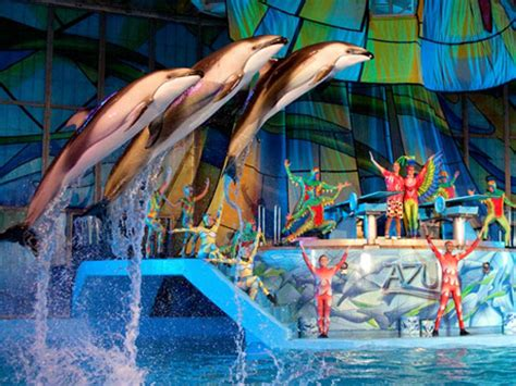 Where To Buy Sea World Gift Cards - azul theatrical animal show seaworld san antonio