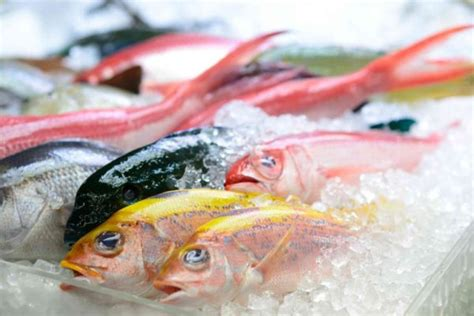 pesce alimentazione pesce azzurro dietaok it dieta e alimentazione sana