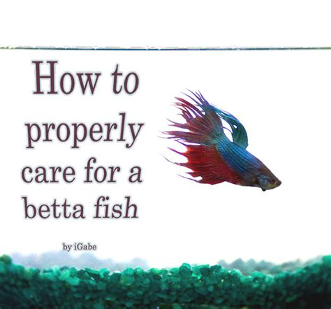 Do Betta Fish Need Light by How To Properly Care For A Betta
