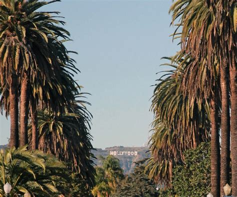 hollywood sign from street how to find the palm tree lined street with a view of the