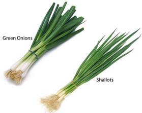 green onions vs shallots thosefoods com