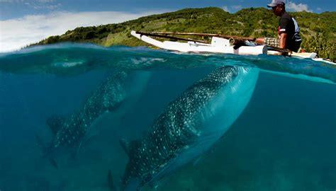 Liveaboard Diving Trips in the Philippines   Siren Fleet