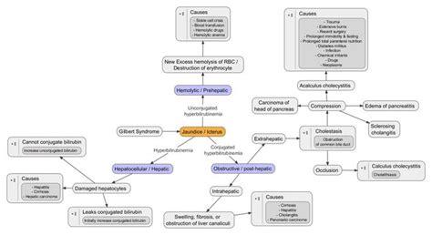 how to make a pathophysiology diagram hyperbilirubinemia pathophysiology diagram search