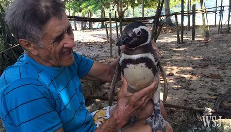 St Pinguin 50 dindim il pinguino che ogni anno torna a trovare l uomo