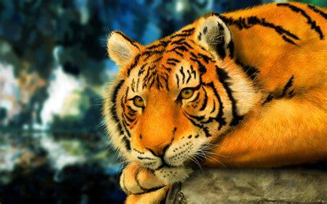 anime wallpaper tiger tiger 3d anime hd desktop wallpapers 4k hd