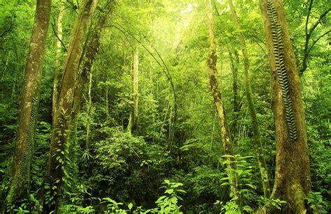woodland tree green fern woodland wallpaper murals muralswallpaper co uk
