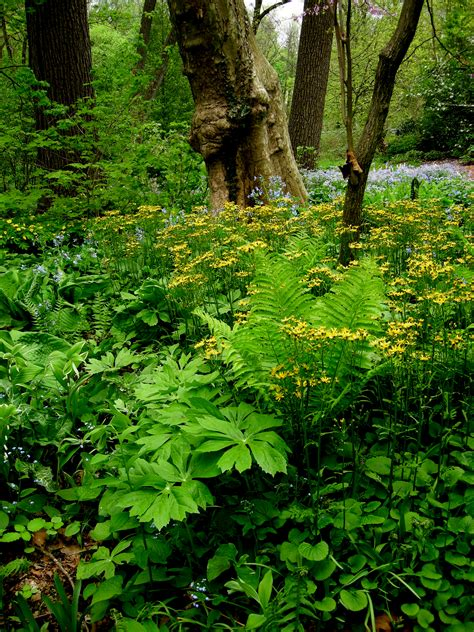 your native woodland if you build it they will come carolyn s shade gardens