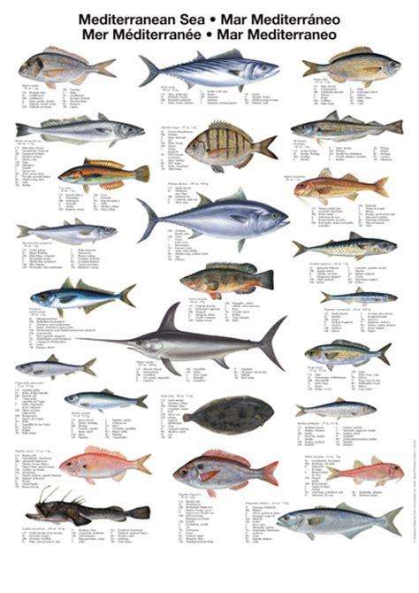 pier meaning in urdu related keywords suggestions for names of ocean fish