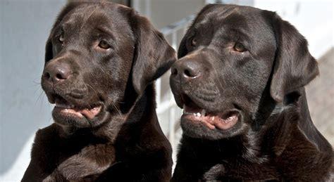 alimenti coniuge coniuge separato paga gli alimenti anche per i due cani