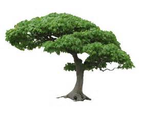 tree images tree png transparent images free clip