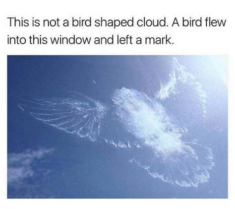 this is not a this is not a bird shaped cloud a bird flew into this window and left a mark meme on sizzle