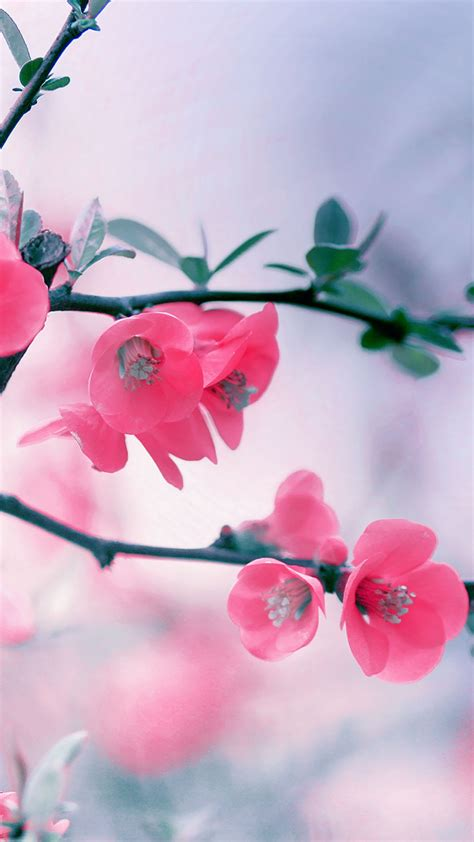 hd wallpaper for android flower cool pink iphone wallpapers hd pixelstalk net