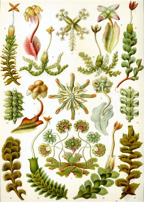 the and science of ernst haeckel multilingual edition books 1000 images about ernst haeckel s kunstformen der natur