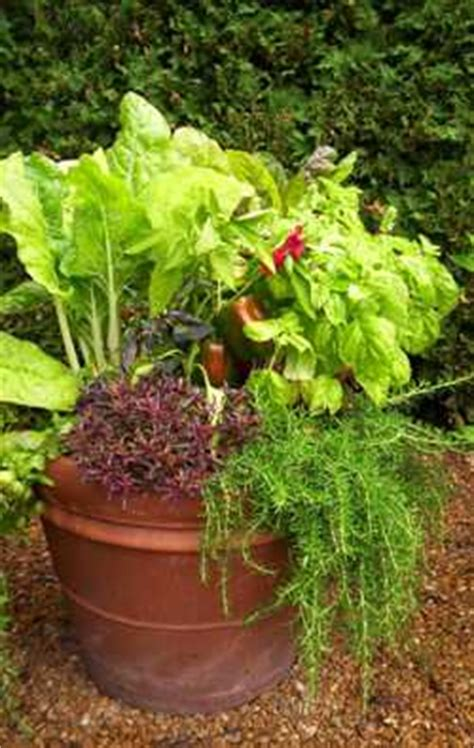 top  vegetables  containers