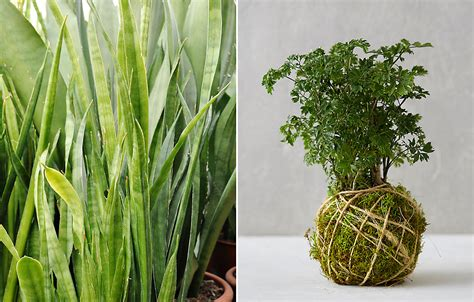 plants that need low light low light plants for winter at home the blog at terrain