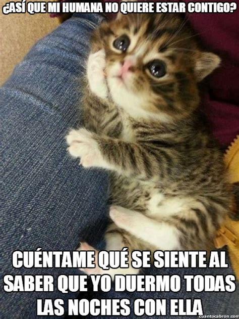 imagenes wasap gordos imagenes y memes graciosos de gatos para whatsapp fondos
