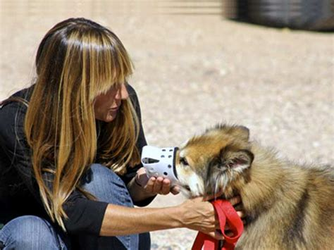 animal friends friends  animals animal friendship friendship  animals