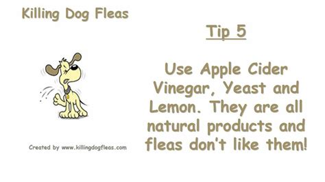 how to get rid of dog lice in the house how to get rid of fleas naturally killing dog fleas youtube