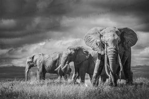 Safira Whity foto in bianco e nero fatte in safari imagesafaris