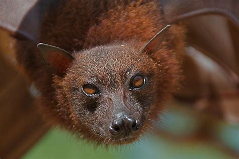 big bat  bali  batty  dont  getty