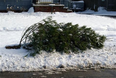 when to take decorations after when to take trees and decorations after