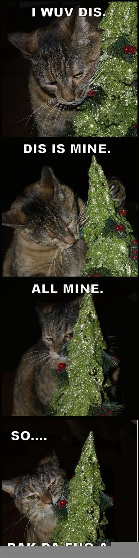 Christmas Tree Meme - just a cat and her christmas tree meme guy