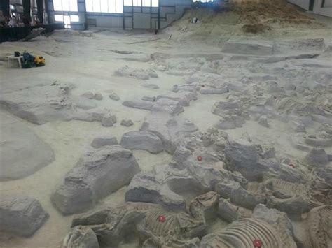 ashfall fossil beds state historical park barrel bodied rhino picture of ashfall fossil beds state