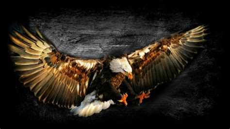 abstract eagle wallpaper bald eagle work of art fantasy abstract background
