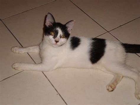 Manja World Dosen Kucing ezlin77 kucing 1