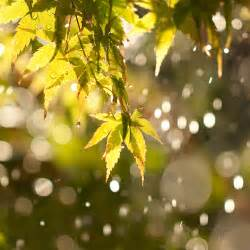 Sun Shower by Weather Focused Moments