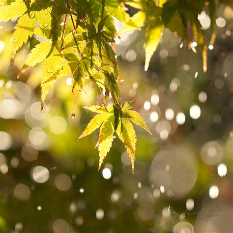 Sun Shower by Sun Shower Focused Moments