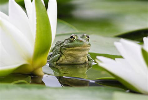 how to build a frog pond in your backyard build your own frog pond baby matters blog