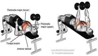 muscles used for bench press decline hammer grip dumbbell bench press a compound