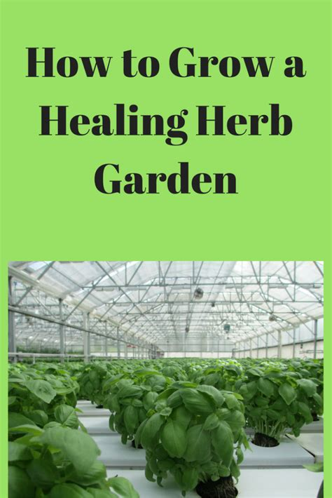 how to grow herbs how to pretty up your space with a healing herb garden