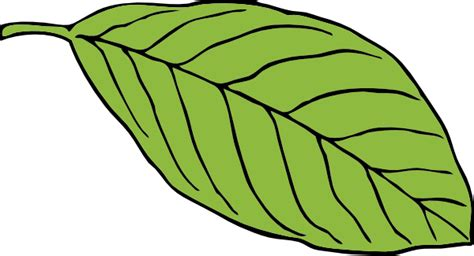 printable green leaves jungle leaf template printable clipart best