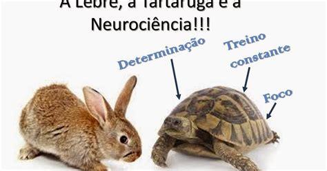 lade tartaruga neuroci 234 ncias em benef 237 cio da educa 231 227 o a lebre a
