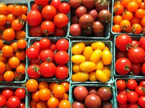 pomodoro ciliegino in vaso pomodoro ciliegino pomodoro caratteristiche