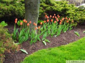 spring garden design 25 spring flower beds and yard