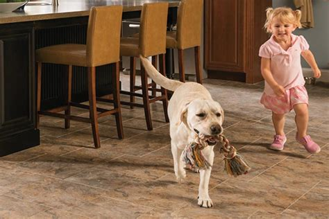 Best Flooring For Pets Top 28 Best Flooring With Pets Laminate Wood Flooring Pet Stains Wooden Home Best Hardwood