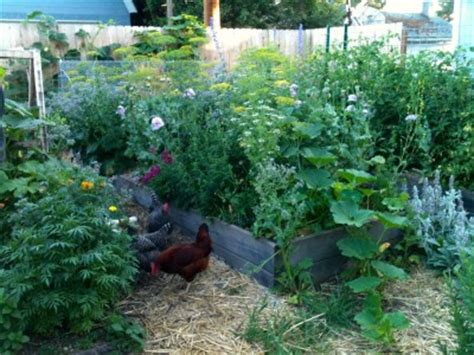 permaculture backyard urban permaculture design your own backyard oasis out there monthly