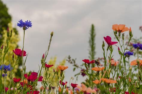 desktop gratis fiori foto gratis prato estate fiori sfondo immagine gratis