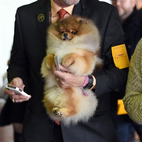 spell pomeranian meet the dogs whose names are to fit in this headline wfae