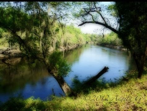 Image result for Suwannee River