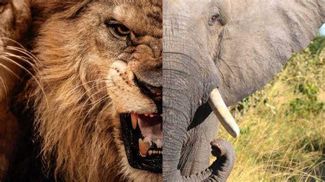 best ter top 10 gevaarlijkste dieren ter wereld