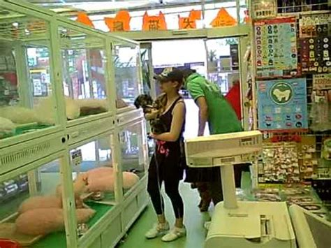 a pet store in tokyo youtube