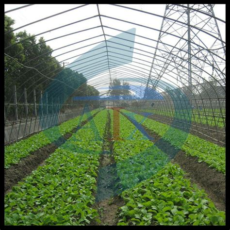 Automatic Seed Planter by Automatic Precision Vegetable Manual Seed Planter Buy