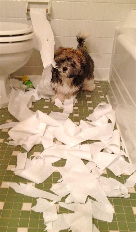 puppy toilet paper to with does your shred paper