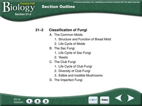section 21 2 classification of fungi ppt animal vegetable or mineral powerpoint